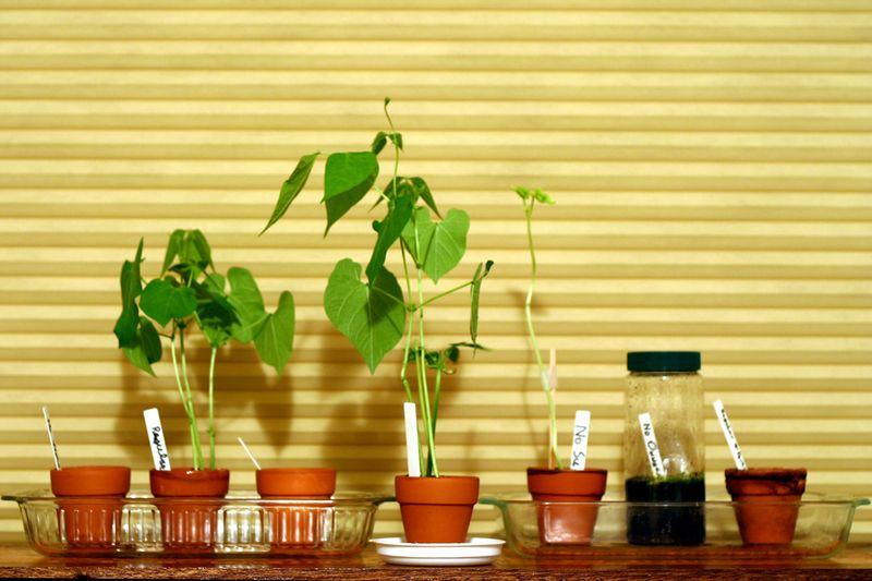 A Plants 018 - Copy